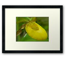 A ladies Slipper Framed Print