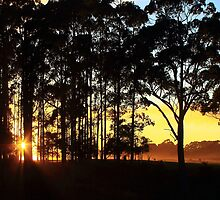 Dawn at Mengha in nor west Tasmania , Australia by phillip wise