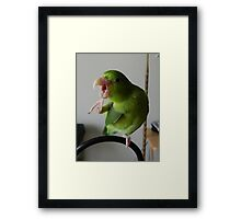 What's that Sonny, I can't hear you.... Framed Print