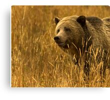 Grizzly Sow-Signed-#1654 Canvas Print