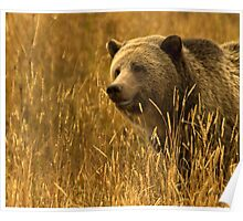 Grizzly Sow-Signed-#1654 Poster