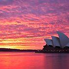 Sublime Sydney Sunrise by Liz Percival