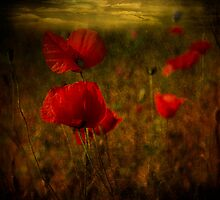 Fields of Red #2 by Barbara Simmons