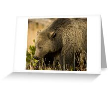 Grizzly Sow-Signed-#5036 Greeting Card