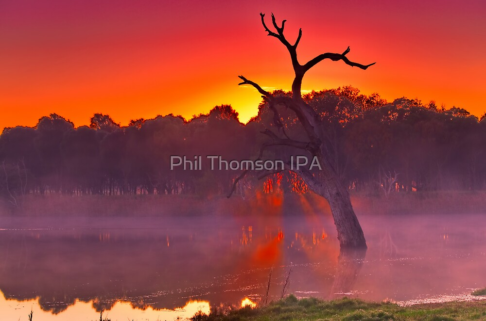 """Mist Of The Morn"" by Phil Thomson IPA"