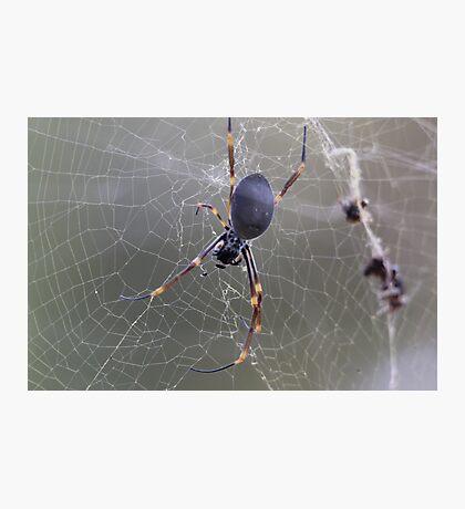 Wicked Web Photographic Print