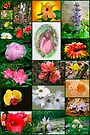 Floral Collage by MotherNature