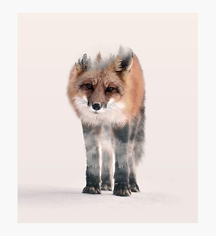 hondo kitsune Photographic Print
