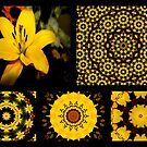 Flowers and kaleidoscopes by Esperanza Gallego