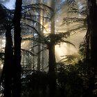 Through the Ferns by Michael Treloar