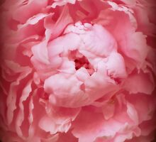 Vintage Peony by francelal