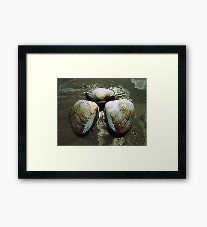 Clams Framed Print
