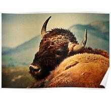 Bison 12 Poster