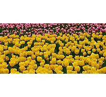 Tulips 13 Photographic Print