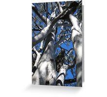 noosa trees Greeting Card