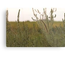 Prairie. Metal Print