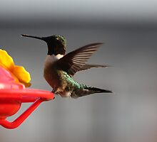 Pretty Lil HummingBird # 2 by gypsykatz