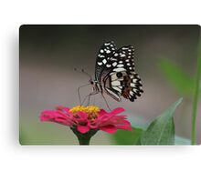 Colors of Nature Canvas Print