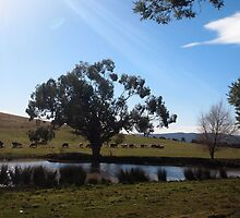 A cool winter's day in Lancefield the gum tree stands tall, Victoria Australia by Margaret Morgan (Watkins)