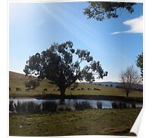 A cool winter's day in Lancefield the gum tree stands tall, Victoria Australia Poster