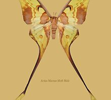 Aactias Maenas Moth Male by Walter Colvin