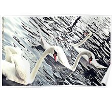 Swans and Swans Poster