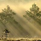 16.6.2012: Bird's Morning by Petri Volanen