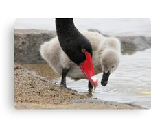 Watch  me son This is how you do it  baby swan Canvas Print
