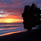 Cape Kidnappers sunrise by Travis Easton