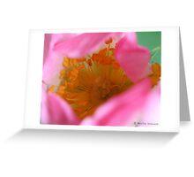 Dog rose beauty Greeting Card