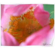 Dog rose beauty Poster
