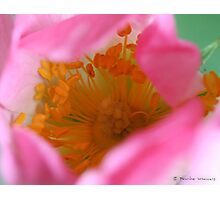 Dog rose beauty Photographic Print
