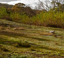 You Yangs - Near Geelong by Colin  Ewington
