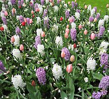Pretty Pastels - Flowering Bulbs in the Keukenhof by MidnightMelody