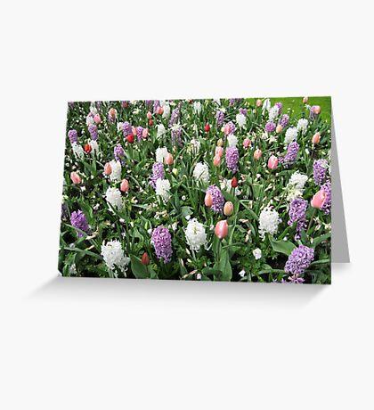 Pretty Pastels - Flowering Bulbs in the Keukenhof Greeting Card