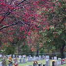 AUTUMN IN THE CEMETERY by Pauline Evans