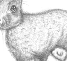 European Hare Sticker