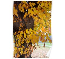 The Maple Tree in Autumn Poster