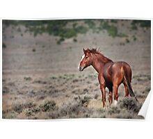 Cherry Creek Mustang Poster