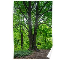 Tree on the Path Poster