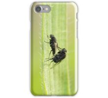 Flies in love ... the Greek way! iPhone Case/Skin
