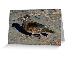 Femlae wood Duck Hen Greeting Card