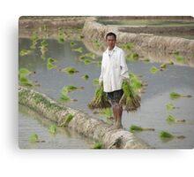 Planting Rice in Rural Laos Canvas Print