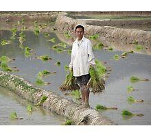 Planting Rice in Rural Laos Photographic Print