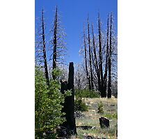 TOTEMS OF THE FIRE SPIRIT Photographic Print