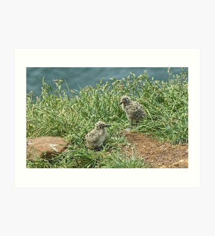 Herring Gull Chicks Art Print