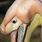Closeup Pelican by Peter Wiggerman