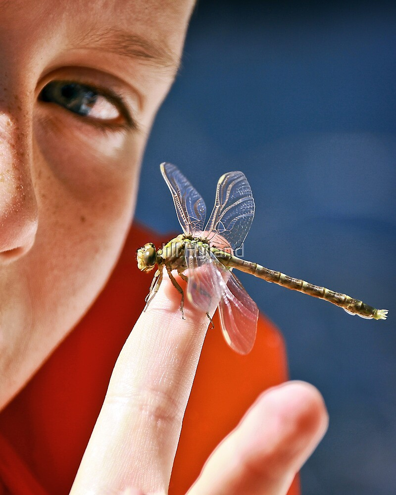 Evan and the Dragonfly by Jill Hyland