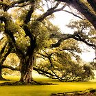 Oaks by SuddenJim