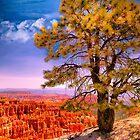 Ponderosa Pine by LudaNayvelt